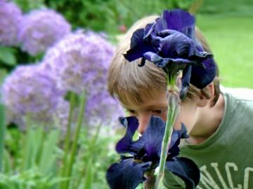 Attraktive Blüten auf Nasenhöhe verlocken einfach zum Schnuppern. Umso schöner, wenn sie tatsächlich über einen angenehmen Duft verfügen, so wie viele Schwertlilien (Iris). (Foto: GMH/Bettina Banse)