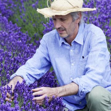 Besonders beim Echten Lavendel gibt es unzählige Violett- und Lilatöne. Zu dieser Vielfalt entscheidend beigetragen hat der englische Lavendelzüchter Simon Charlesworth. (Foto: GPP/Downderry)